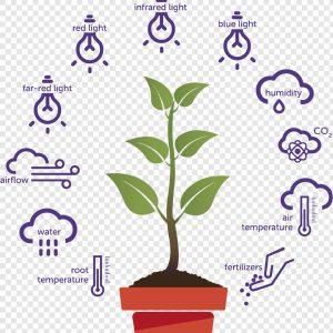 فیزیولوژی و بهنژادی گیاهی
