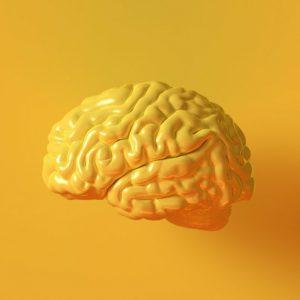 علوم اعصاب و نوروساینس